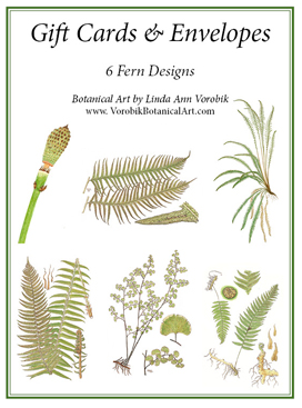 Fern Gift Card Pack