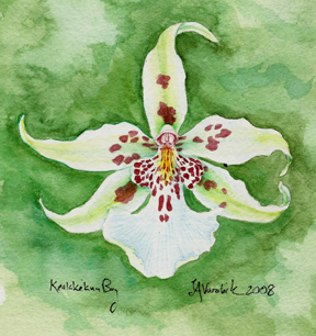 white orchid flower watercolor with green background