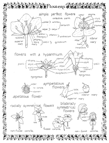 June 2008 PDF: Flower terminology.